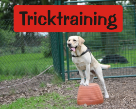 Tircktraining im Ticketsystem